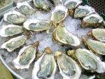 dollar-oysters
